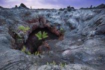 Дерево папороті бутонів всередині Лавові тунелі — стокове фото