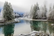 Winter fog over snowcapped trees at lake shore, Vancouver Island — Stock Photo