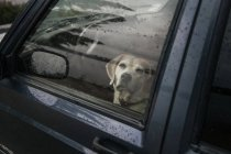 Dog sitting inside car and looking at camera through window — Stock Photo