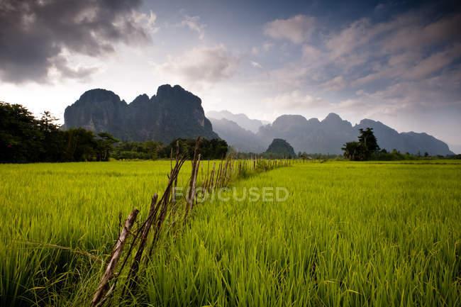 Campo verde exuberante con cerca - foto de stock