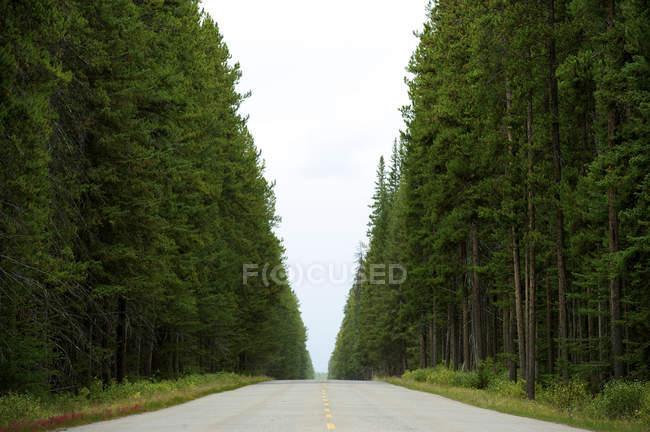 Árvores altas, crescidas em ambos os lados da estrada — Fotografia de Stock