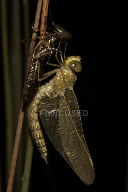 Close up shot of dragonfly on grass — Stock Photo
