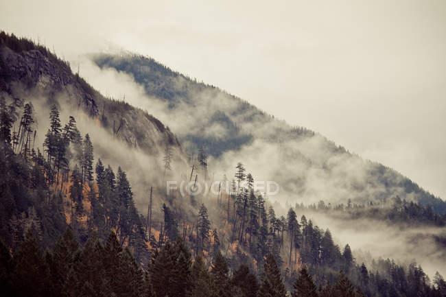 Mist and clouds on mountain — Stock Photo