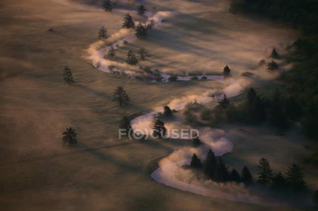 Tir longue exposition du champ brumeux des arbres à la tombée de la nuit — Photo de stock