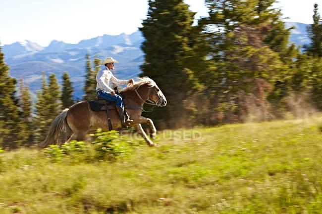 Cowboy Pferd über Colorado Kammlinie racing — Stockfoto