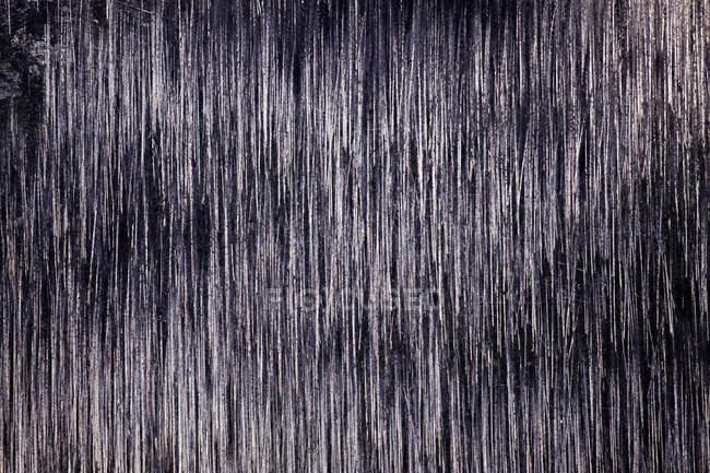 Пташиного польоту палена стовбурів — стокове фото