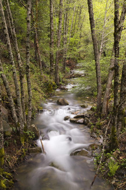 Stream flowing through green forest, long exposure shot — Stock Photo