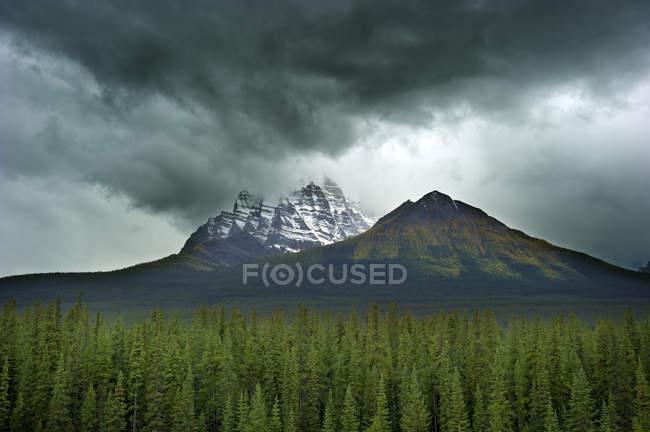 Вершина горы покрыта снегом с драматическим небо и соснового леса на переднем плане — стоковое фото