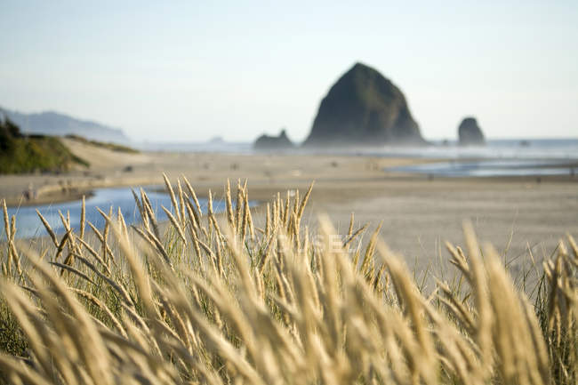 Wheat with Haystack Rock — Stock Photo