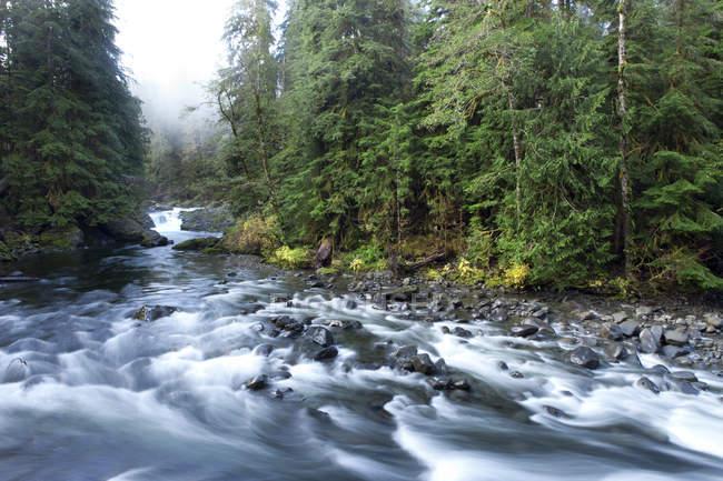 Река течет через густой зелени деревьев в тропических лесах — стоковое фото