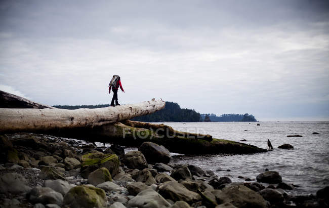 Man walking on fallen log during hiking trip coast of Olympic National Park, Washington — Stock Photo