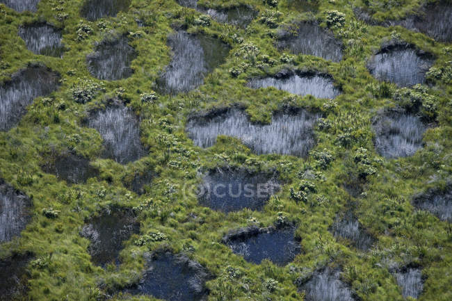 Aerial view of swampy fen with green plants — Stock Photo
