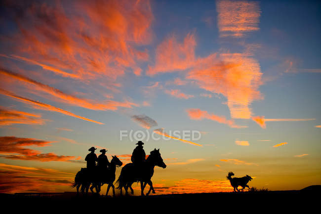 Silhouetted group of cowboys riding along ridge line while sun setting — Stock Photo