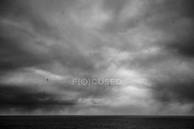 Seabirds flying on cloudy dramatic sky over sea, black and white — Stock Photo