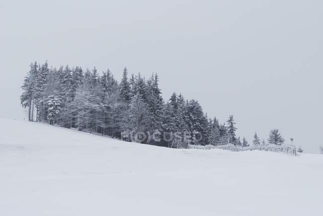Arbres gelés sur pente recouverte de neige — Photo de stock