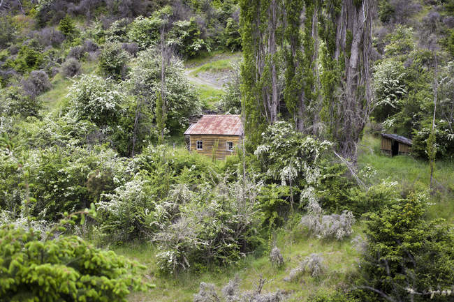 Abandoned house in green lush foliage — Stock Photo