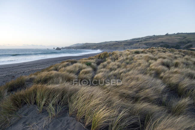 Grama alta sopra vento em dunas perto de beira-mar — Fotografia de Stock
