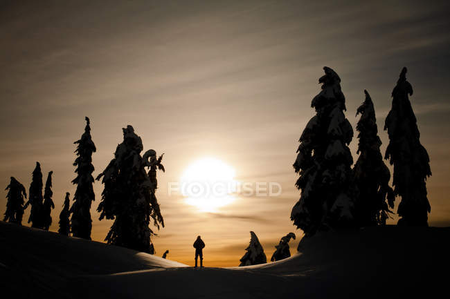 Silhouetted figure surrounded by silhouetted fir trees — Stock Photo