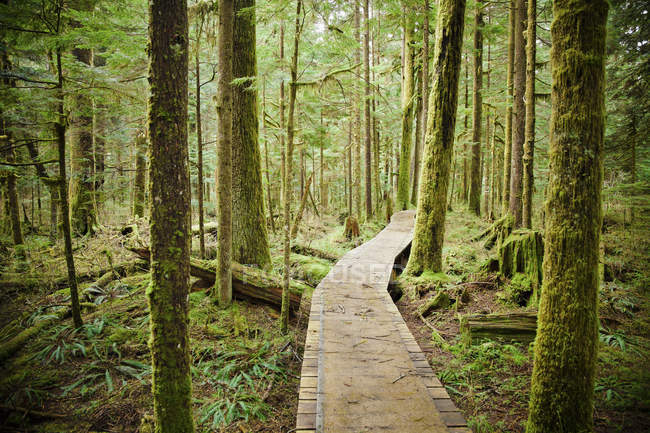 Boardwalk in lush green mossy forest — Stock Photo
