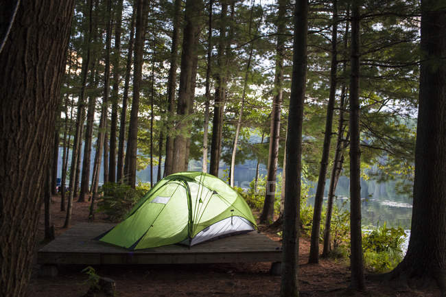 Палатка в лесу возле реки светящийся от внутри — стоковое фото