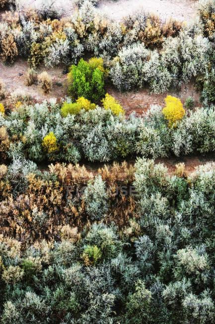 Luftaufnahme von Bäumen im Canyon De Chelly National Monument — Stockfoto