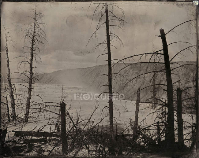 Bare trees and hot springs, sepia toned — Stock Photo