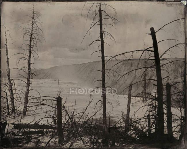 Голі дерева і гарячими джерелами тоноване сепія — стокове фото