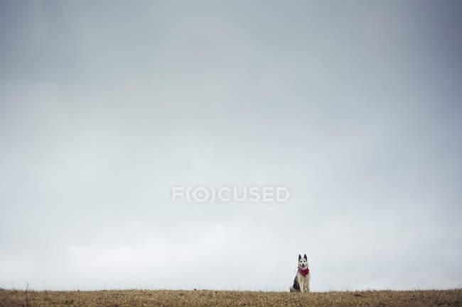 Hundesitting auf Hügel gegen grauen blauen Himmel — Stockfoto