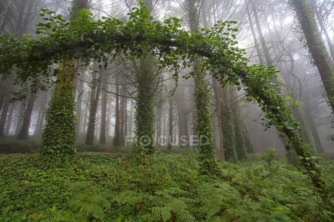 Ansicht der üppigen grünen Peninha Wald im Nebel — Stockfoto