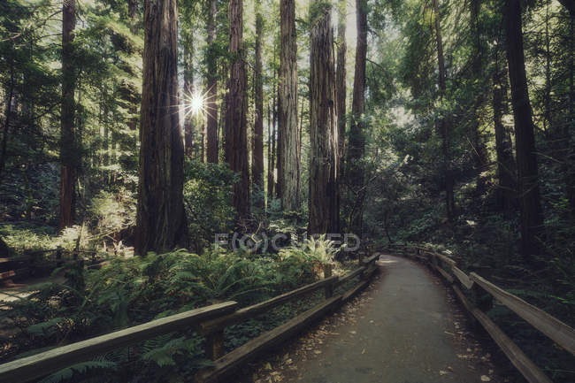 Asphalt pathway between tall trees in national park — Stock Photo