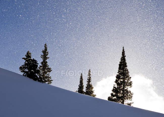 Освещенные солнцем снег вокруг сосновых деревьев на холме — стоковое фото