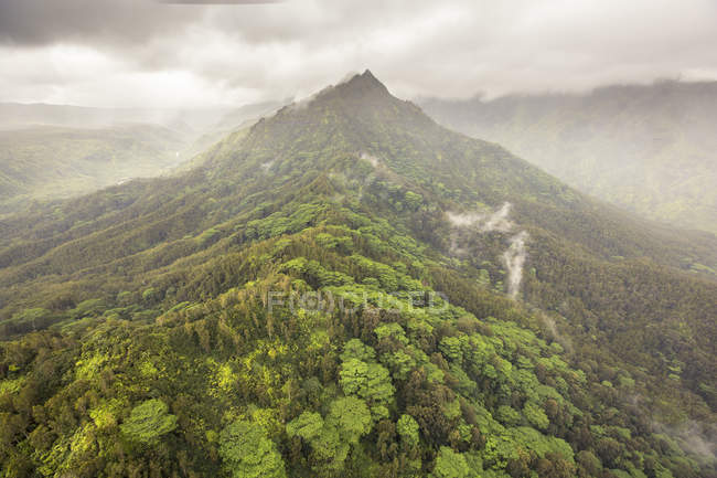 Hill rainforest covered with mist — Stock Photo