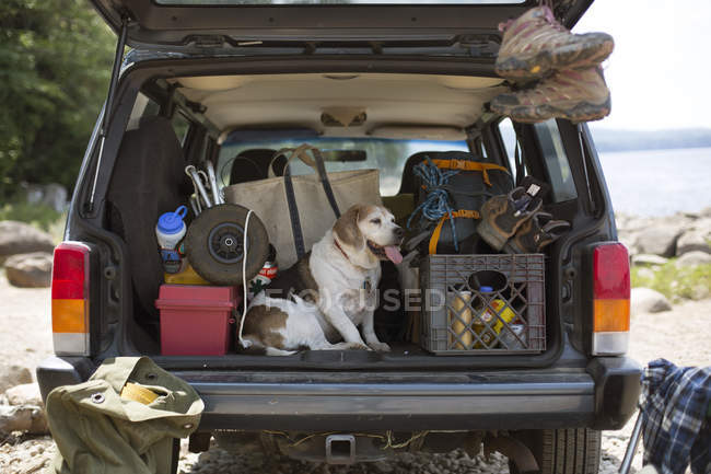 Dog Relaxing On The Back Of A Car During A Road Trip — Stock Photo