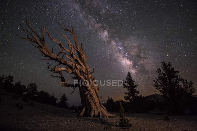 Старий стовбур дерева з неба повне зірок Чумацького шляху — стокове фото