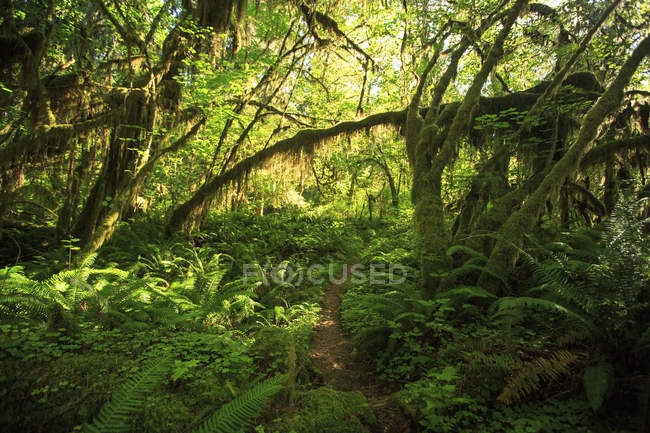 Hiking pathway leading through lush green dense forest — Stock Photo