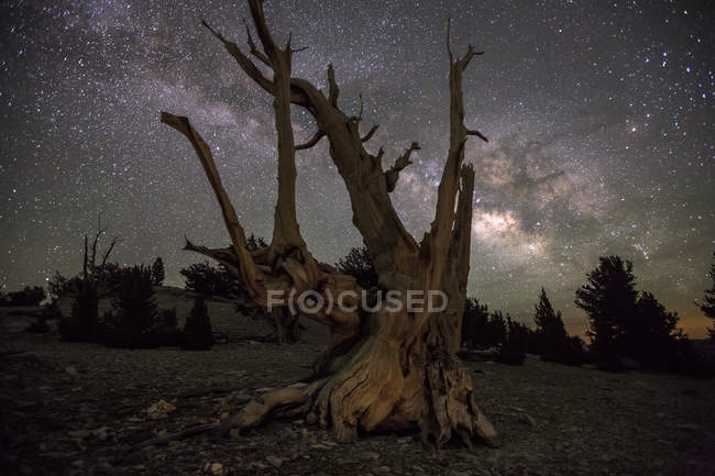 Old tree trunk with sky full of Milky Way stars — Stock Photo