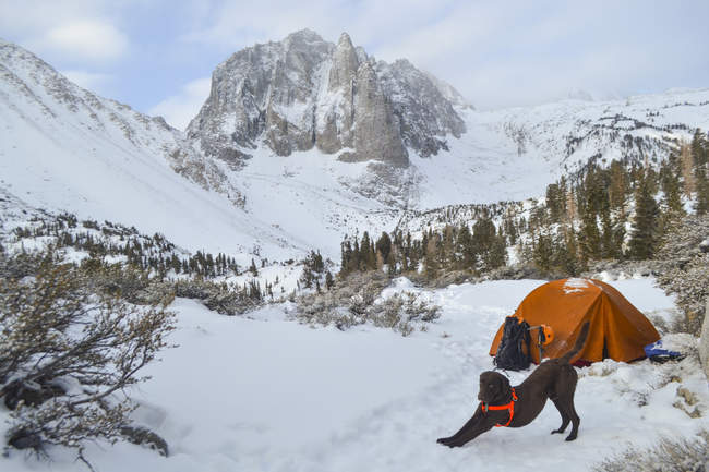 Scenic view of dog and camp below Temple Crag in John Muir Wilderness — Stock Photo