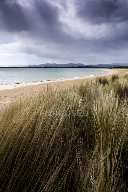 Storm clouds and wind swept maron grass lining — Stock Photo