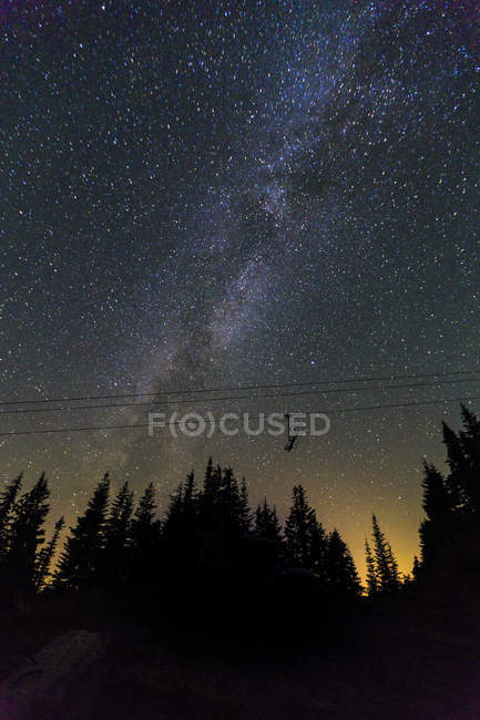 Milky Way stars shining above pine forest — Stock Photo