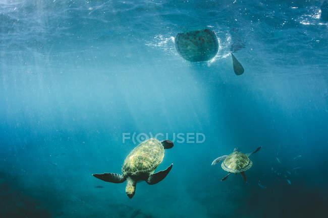 Unterwasser Aufnahme von schwimmenden Schildkröten mit Lichter der Sonne — Stockfoto