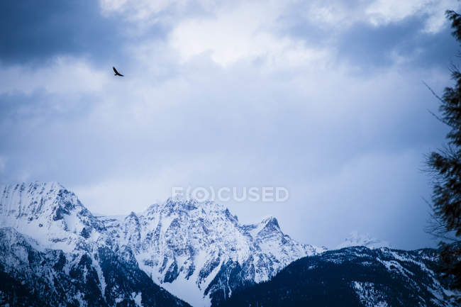 Eagle Flying Over Mountain Landscape During Sunset — Stock Photo