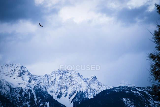 Орел літати над гірський краєвид під час заходу сонця — стокове фото