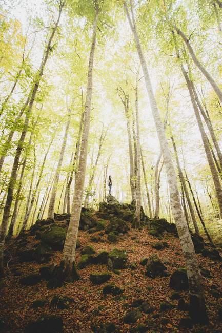 Homme debout sur la colline dans la forêt verte — Photo de stock