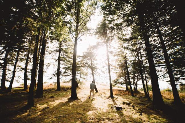 Homme debout dans la forêt en plein soleil — Photo de stock