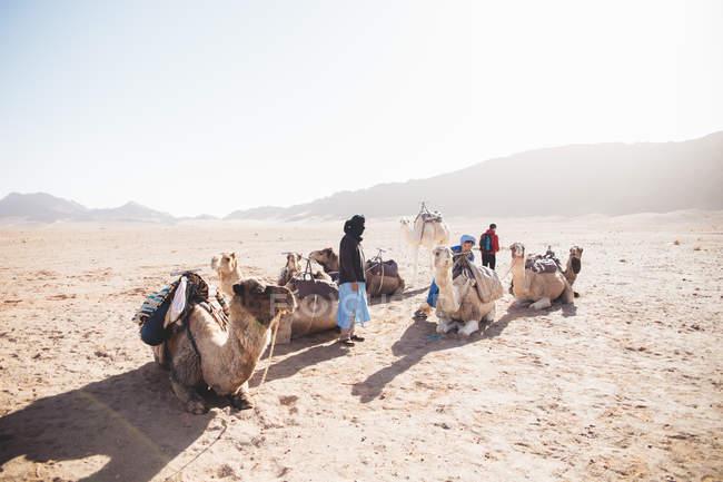 Persone con cammelli nel deserto illuminato sole — Foto stock