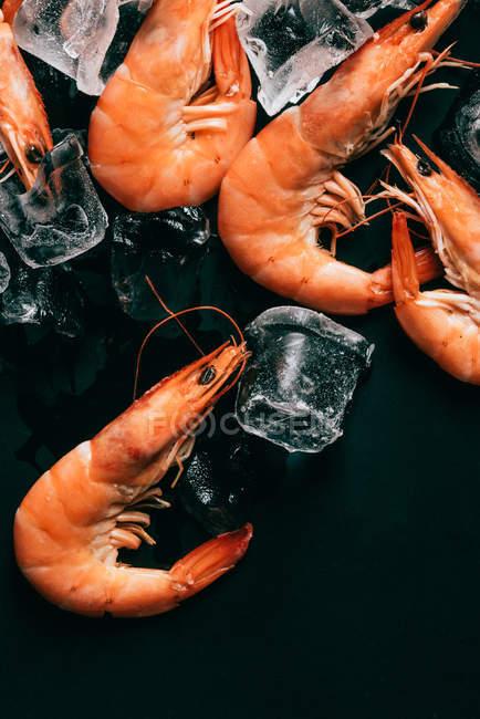 Vista elevada de camarones y cubitos de hielo en superficie oscura - foto de stock