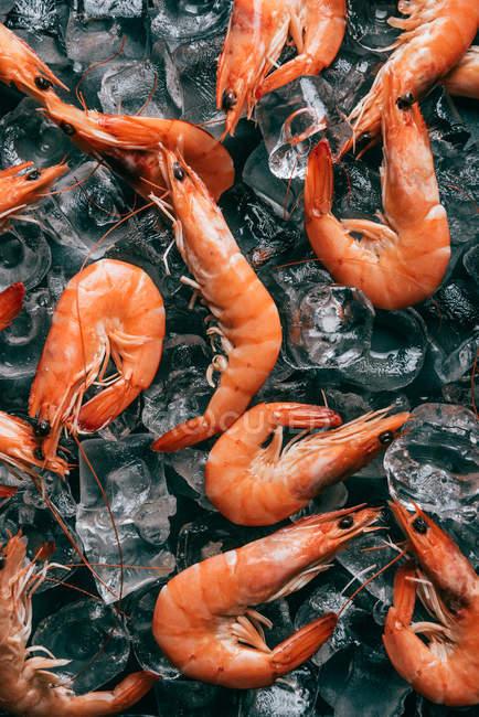 Ve desde arriba de la pila de los camarones en cubos de hielo - foto de stock