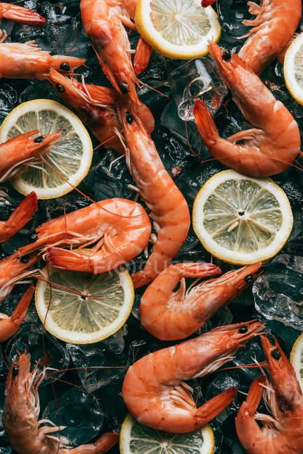 Vista superior de rodajas de limón y de pila de los camarones en cubos de hielo - foto de stock