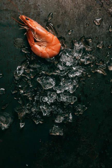 Vista elevada de fusión de hielo y camarón sobre mesa rústica - foto de stock