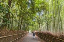 Path in bamboo forest, Arashiyama, Kyoto, Japan — Stock Photo
